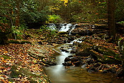 West-virginia-fall-foliage-creek-waterfalls_-_West_Virginia_-_ForestWander (1)